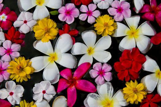 flower on water at chonburi thailand