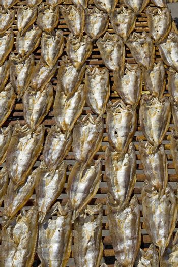 A bamboo rack of freshly split Milkfish drying in the sun at a market in the Philippines.