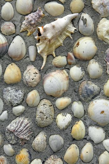 Empty seashells embedded in concrete decorate a wall.