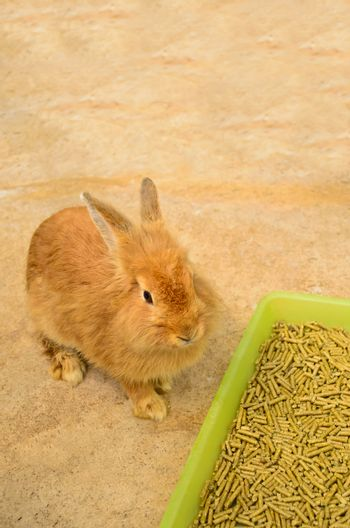 Young rabbit sitting near food tray