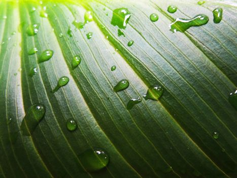 Green leaf and droplets macro