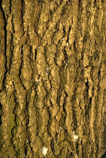 Old bark of tree texture detail