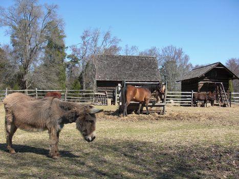 horse and donkey on the farm