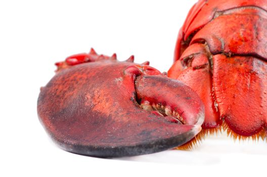 Claw and tail of lobster