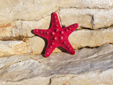 red starfish on the stones