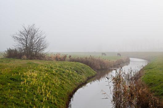 donkeys by canal in fog