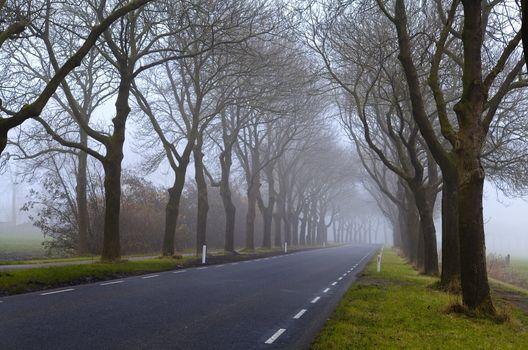 misty asphalt road
