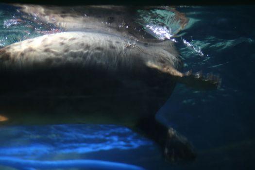 seal in aquarium
