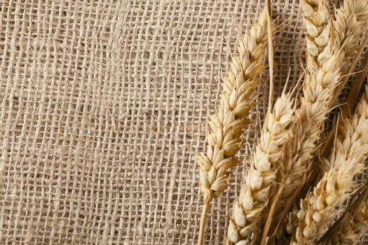 Wheat and Burlap
