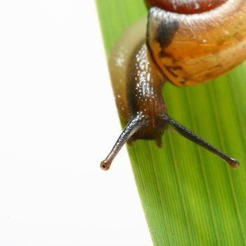 shell on grass