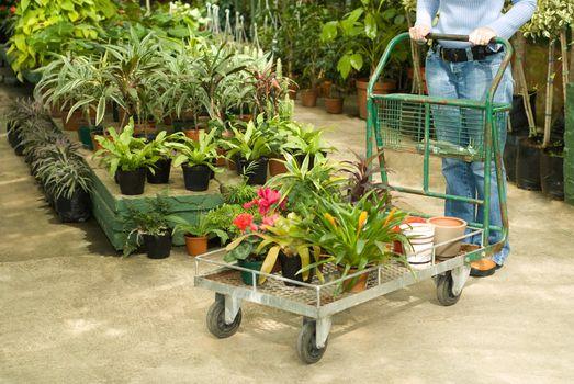 Nursery Plants For Sale