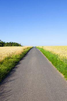 bicycle lane through corn fields under blue sky