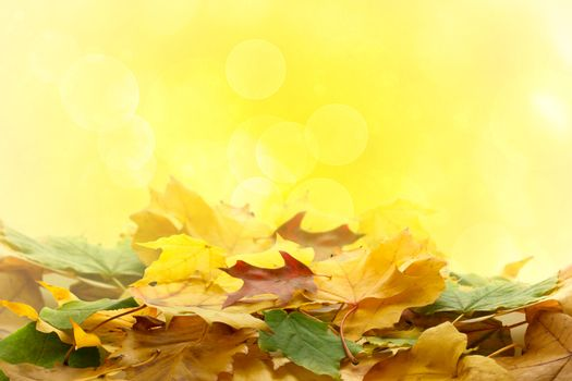 Autumn leaves over abstract lights  background
