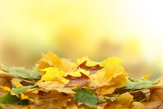 Autumn leaves over blurred background