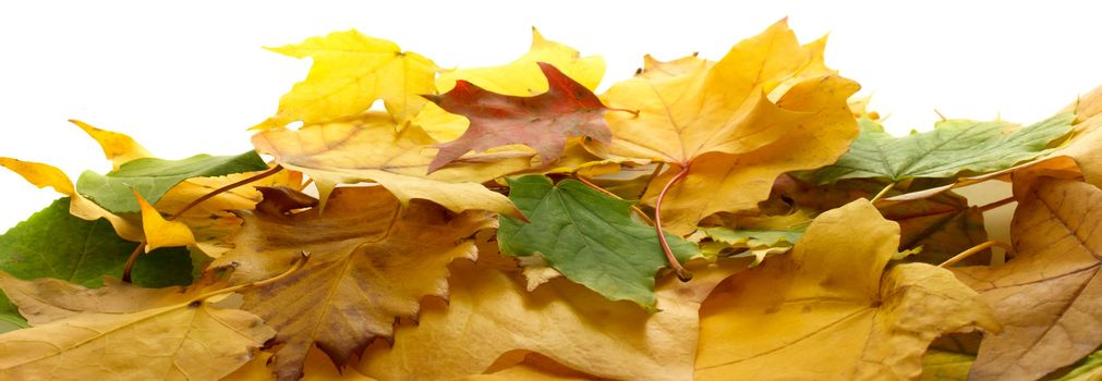 Autumn colorful leaves on white background