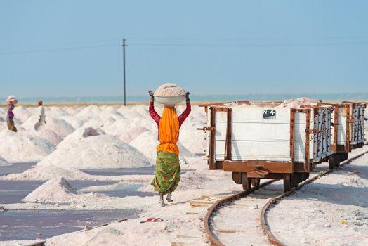 Sambhar, India - Nov 19: Workers collect salt in salt farm on Nov 19, 2012 in Sambhar Salt Lake, India. It is India's largest saline lake and where salt has been farmed for a thousand years.