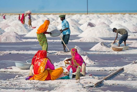 Sambhar, India - Nov 19: Workers collect salt in salt farm on Nov 19, 2012 in Sambhar Salt Lake, India. It is India's largest saline lake and and where salt has been farmed for a thousand years.