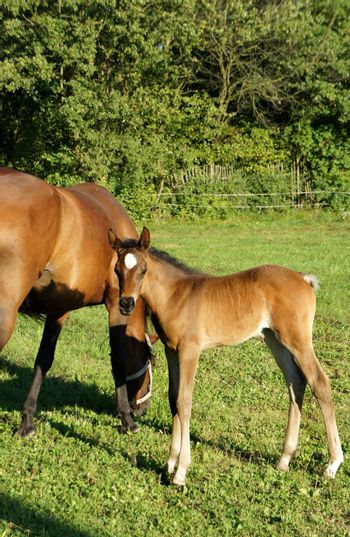 Horse and small funny foal