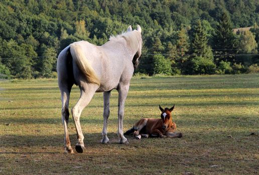 Horse and funny baby horse