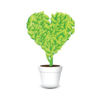 Heart shaped plant in a pot Isolated white background