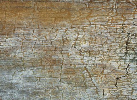 Closeup picture of a Carpathian sandstone texture.