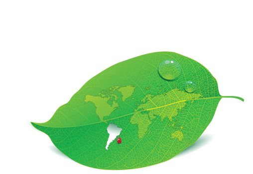 Close up view of a leaf with the world map cut out
