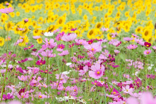 beautiful flowers in the meadow