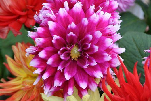 detailed close-up of vivid fresh flower
