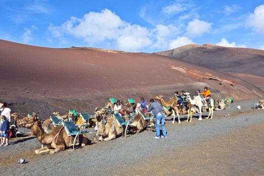 TIMANFAYA NATIONAL PARK, LANZAROTE, SPAIN - DECEMBER 26: Tourists riding on camels being guided by local people through the famous Timanfaya National Park in December 26, 2010 in Lanzarote, Spain