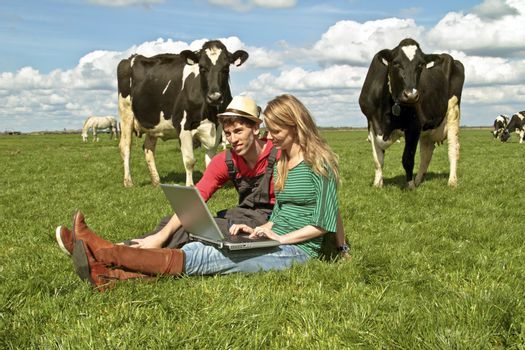 Young couple with laptop between the cows in the countryside from the Netherlands