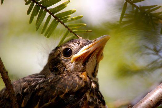 Baby bird closeup