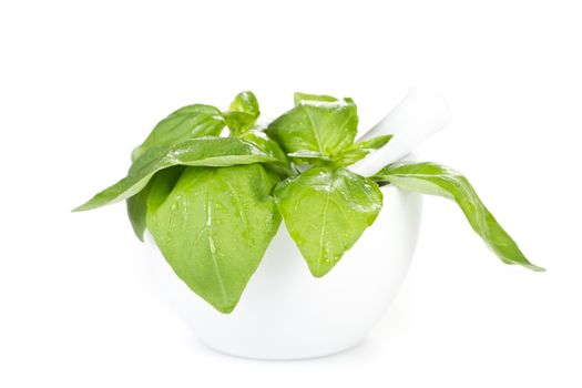 Fresh basil with mortar over white backround