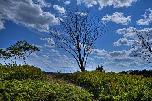 A single tree on a hill near the ocean on a blue sky background