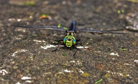 Close-up view of a dragonfly resting on a rock
