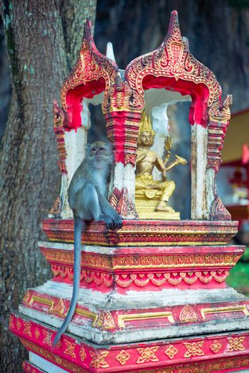 Small monkey sit on shrine at the hill temple in Krabi province, Thailand