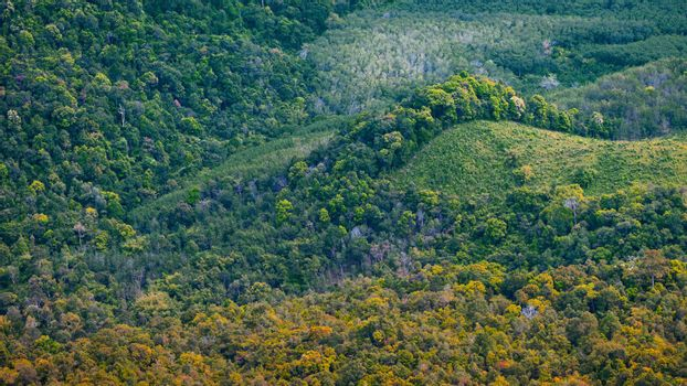 Aerial photo of forest in Thailand