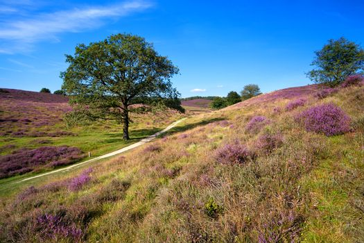 heather on hills