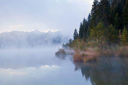 alpine forest in fog
