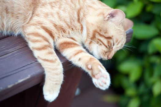 Yellow cat sleeping on the bench in the park