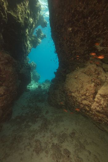 Cavern and aquatic life in the Red Sea.