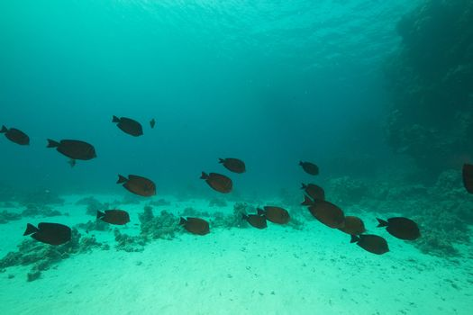 Fish and aquatic life in the Red Sea.