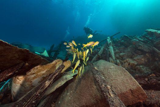 Safari boat wreckage and aquatic life in the Red Sea.