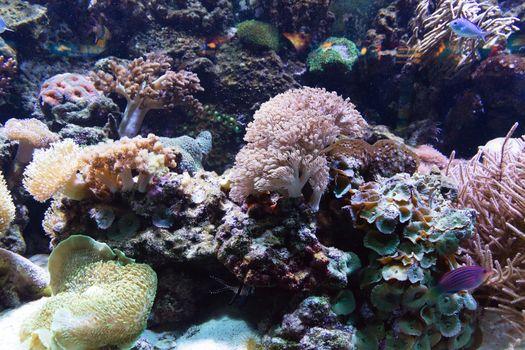 sea fish tropical