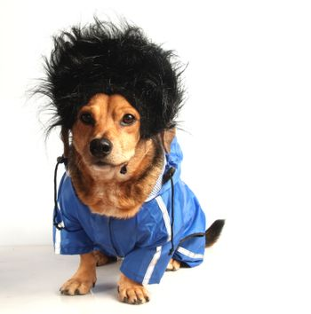 a dog have long black hair and waterproof