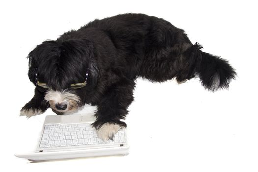 a dog that goes on the internet