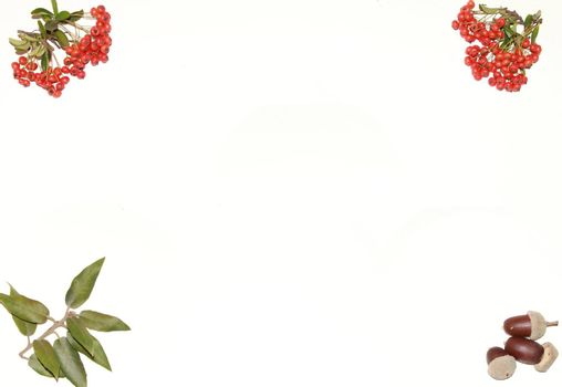 a background of mistletoe berries and acorns