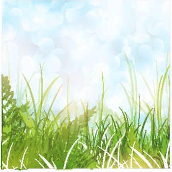Spring or Summer Meadow With Green Grass