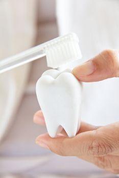 dentist holding molar with brush