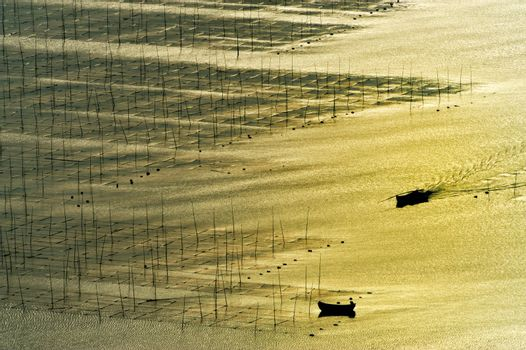 Seaweed farm against strong sunlight, photo taken in Fujian province of China