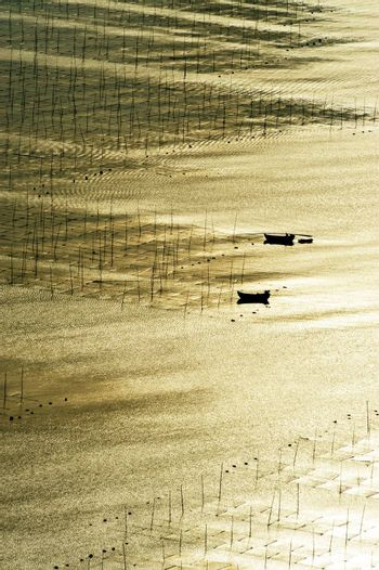 Seaweed farm against strong sunlight in Fujian province of China